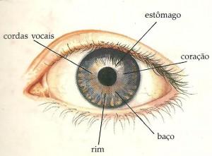 iridologia-300x221